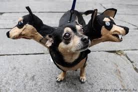 Funny dog costume image